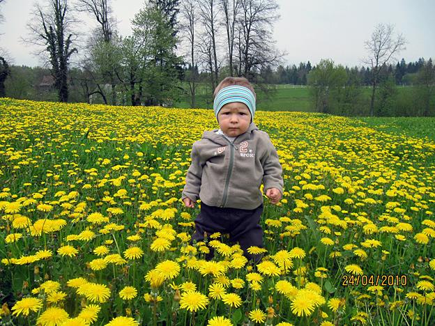 Žan med regratovimi cvetovi